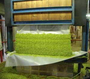 The pressed hops showing four presses